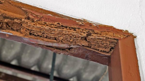 cost of termite extermination