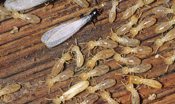 questions about termites