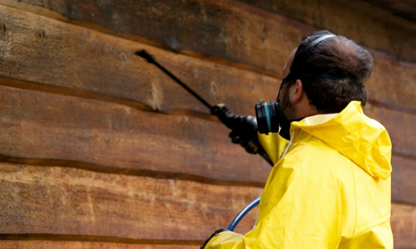 best termite protection